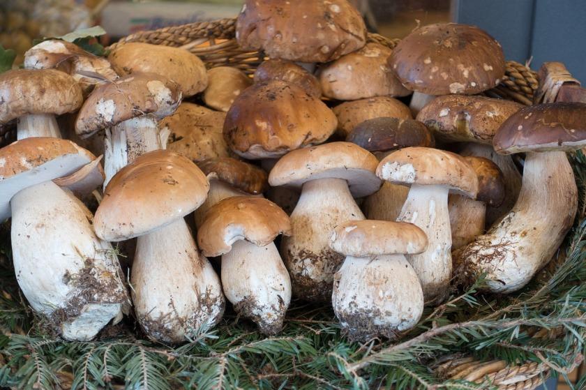 mushroom-976592_1280