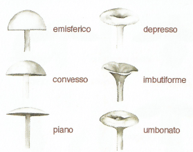 cappello-e1542442764505.png
