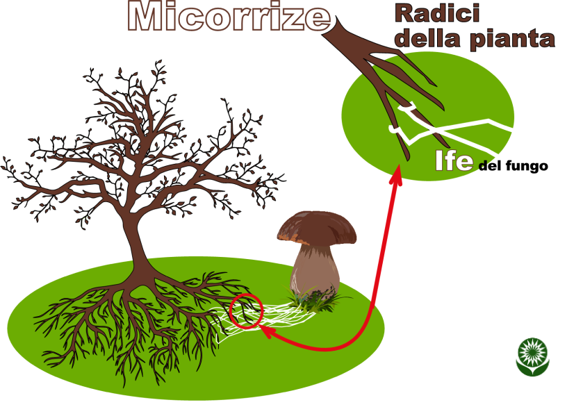 micorz.png