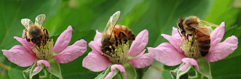 bees-4003580_1920