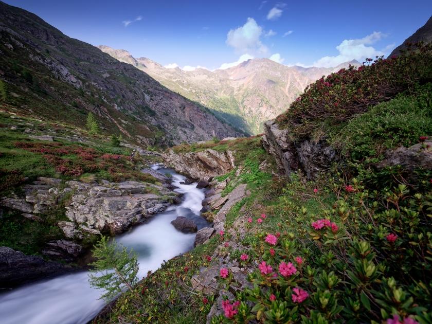 una valle di rododendri