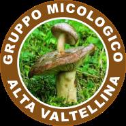 logogruppoMAVvetto